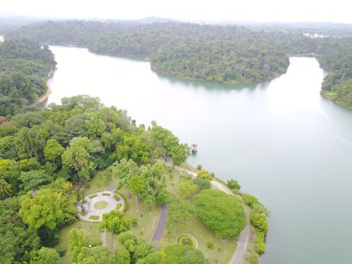 MacRitchie Reservoir Park: Trying to get the reservoir view.